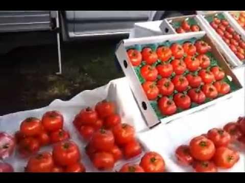Marina's hydroponic tomatoes at Mudgeeraba Farmers Market