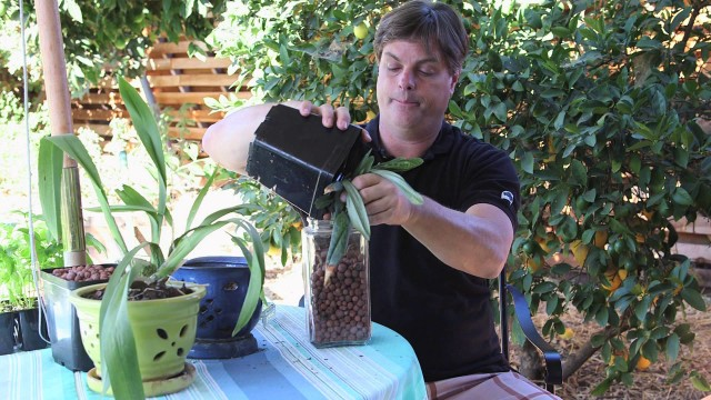 How to Set Up Hydroponic Orchids : Hydroponic Gardening
