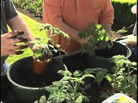 Container Planting with Vegetables
