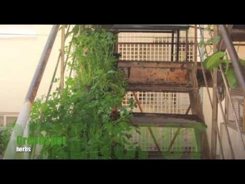 Urban gardening & Aquaponics – GreenSpot – ????? ?????? ????????????