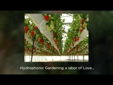 Hydroponic Gardening Simple Easy Fun DIY Garden Tower for the Beginner to the Advance