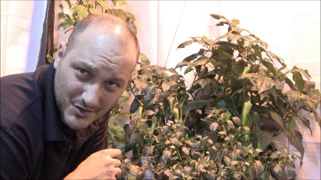 Hydroponic Peppers – Hydroponic Awesome!