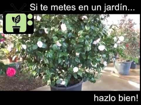 [Consejos de Jardineria] Consejo 15 | Jardiner