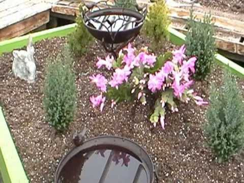 How to Build a Green Roof Doghouse … a Doghouse with a Garden on Top !