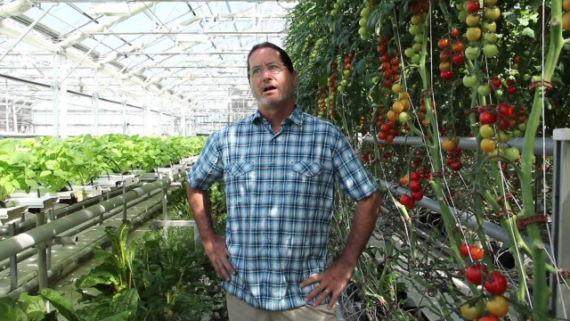 """Hydroponic Farming: """"Get to Know"""" a Commercial Hydroponic Farmer"""