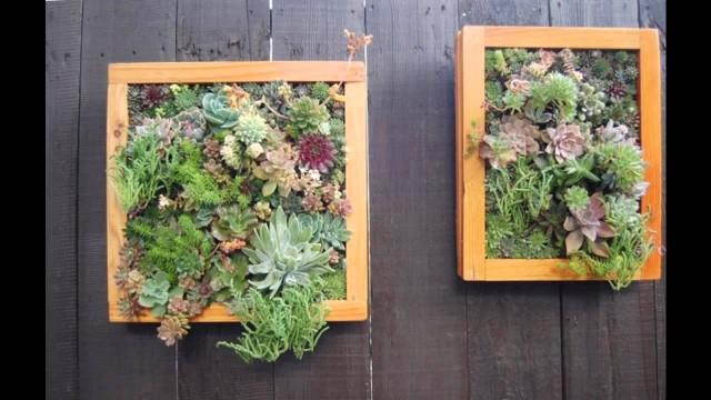 Home vertical succulent garden