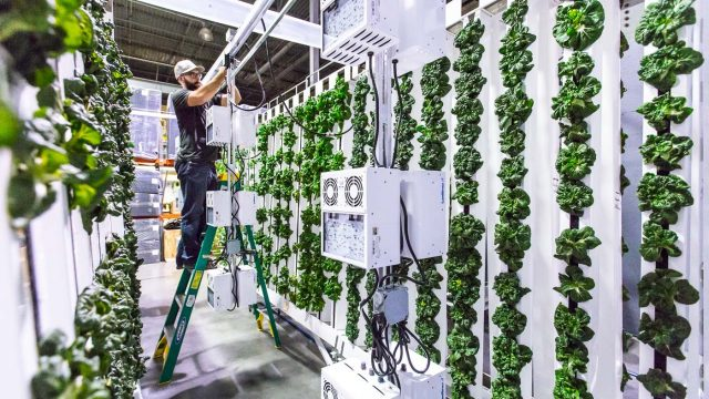 The indoor farm that empowers distributed food production