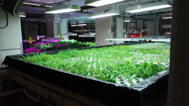 The Plant – An Urban Aquaponics & Sustainable Agriculture Project