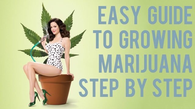 Complete Easy Marijuana Growing Video Guide