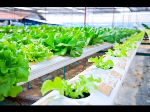 Essential Things in Hydroponic Gardening