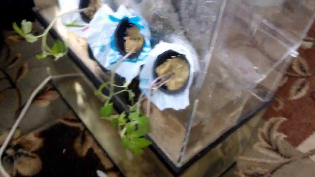 aeroponics with verticle plant test minor fixes