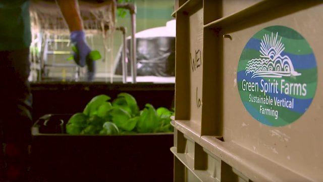 element14 visits Green Spirit Farms for Vertical Farming