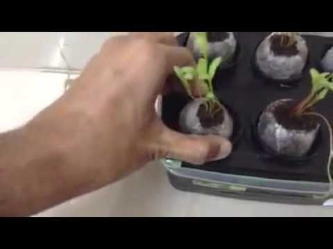 HYDROPONICS HOME MADE SETUP NUTRIENT WATER WITH AIR PUMP