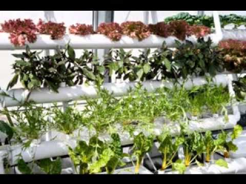 Vertical greenhouse ideas