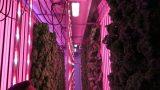 Modern Indoor Hydroponic Farm Tour