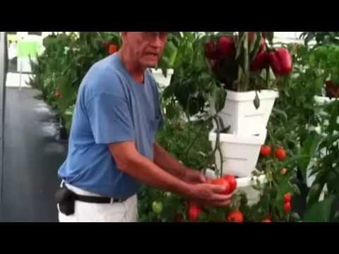 Verti-Gro Growing System 19×48 greenhouse