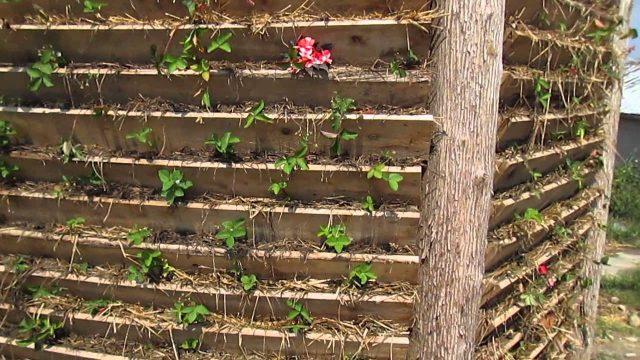 Vertical Garden Wall Fence!