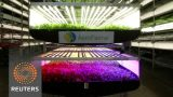 Vertical farming: eliminating growing seasons and supporting locals
