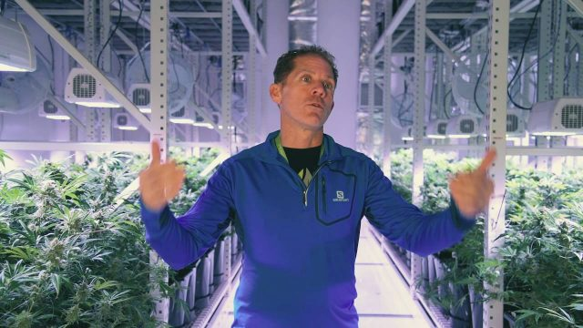 Cannabis High Density Mobile Vertical Growing Systems by Montel Inc.