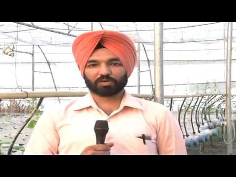 Advanced Hydroponic System in India   Crops from Drops   Young farmer of Punjab