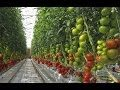 HydroponicsTomato Farming – Agriculture Technology: Hydroponic lettuce system