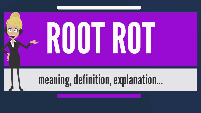 What is ROOT ROT? What does ROOT ROT mean? ROOT ROT meaning, definition & explanation