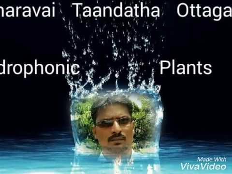 hydrophonics