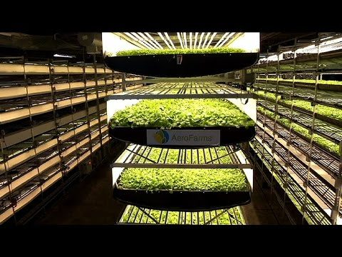 Is vertical farming more energy intensive?