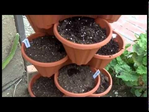 Stacking Pot Lettuce Vertical Garden