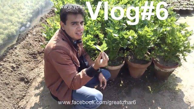 Vlog#6   Visit at Skyseeds Nursery   Nursery Garden Center   Organic Vegetable Gardening