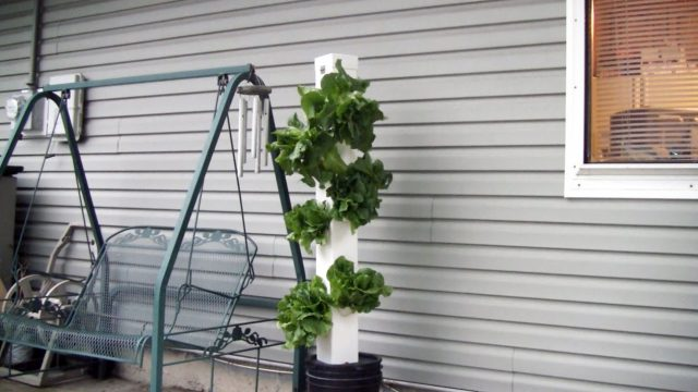 The Rain Tower Modifications, Tips, And Ocean Solution Fertilizer Review