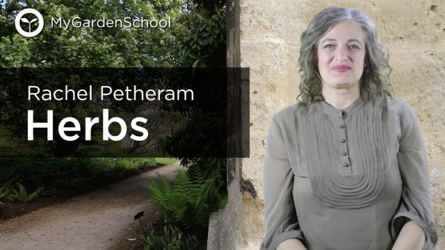 Herbs – How and where to grow them – A course by Rachel Petheram