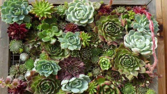 Ideas de jardines verticales para decoracion interior