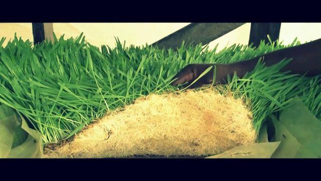 Save on your animal feed using Hydroponics Farming – Titus Mwema