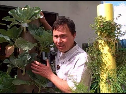 Grow a Patio Vegetable Garden with 14 Crops in 2 Square Feet – The Garden Stick