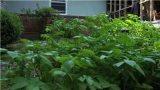 Vegetable Gardening : The Principles of Vegetable Gardening