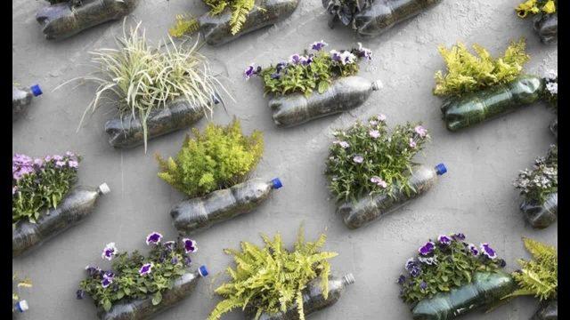 Plastic bottle garden ideas