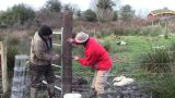 Harvesting Our Green Roof, Tree Planting, And Fencing With A Meitheal (And A Horse).