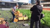 Hydro's Green Roof Gets Bees