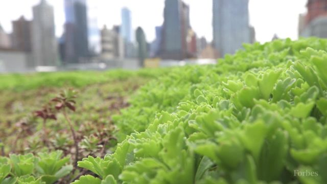 New York's Hidden Rooftop Garden   Forbes