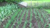 A Year In Our Vegetable Garden – May