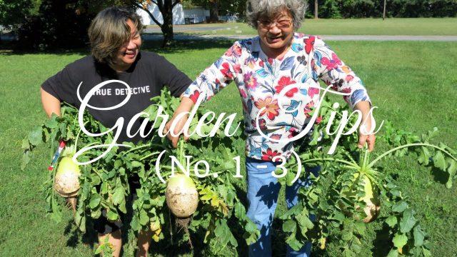 HD Vegetable Garden Tips (No. 1 – 3)