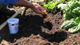 How to Add Coffee Grounds to Your Vegetable Garden Soil : Gardening Advice