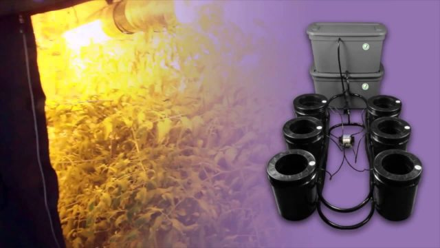 Grow Room   Stealth Hydroponic Grow Systems