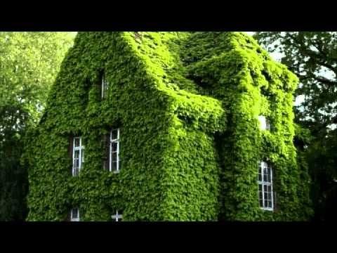 huertas y jardines verticales