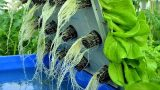WOW! Amazing Agriculture Technology: Hydroponic farming in Israel