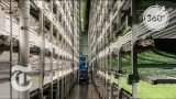 A Vertical Farm Grows In Newark   The Daily 360   The New York Times