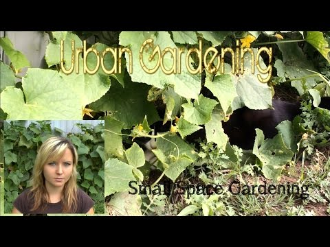 Small Space Urban Gardening
