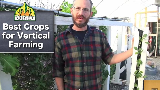 Best Crops for Vertical Farming