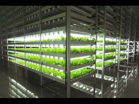BYE BYE to traditional outdoor farming as new indoor farm is 100 times more productive than fields!